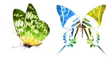 Two watercolor butterflies , isolated on white background