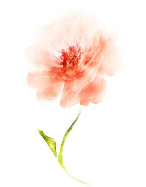 Watercolor flower , isolated on white background stock vector