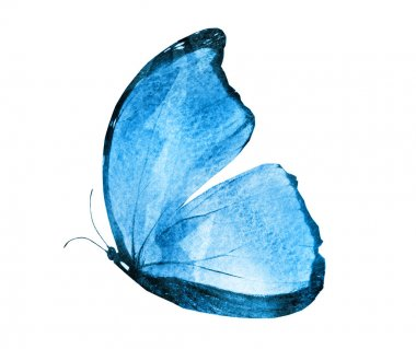 Watercolor butterfly , isolated on white background stock vector