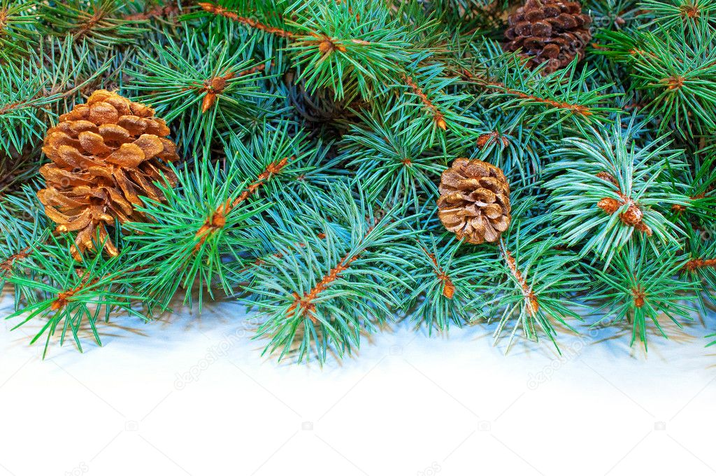 furry christmas tree branches with cones stock photo - Furry Christmas