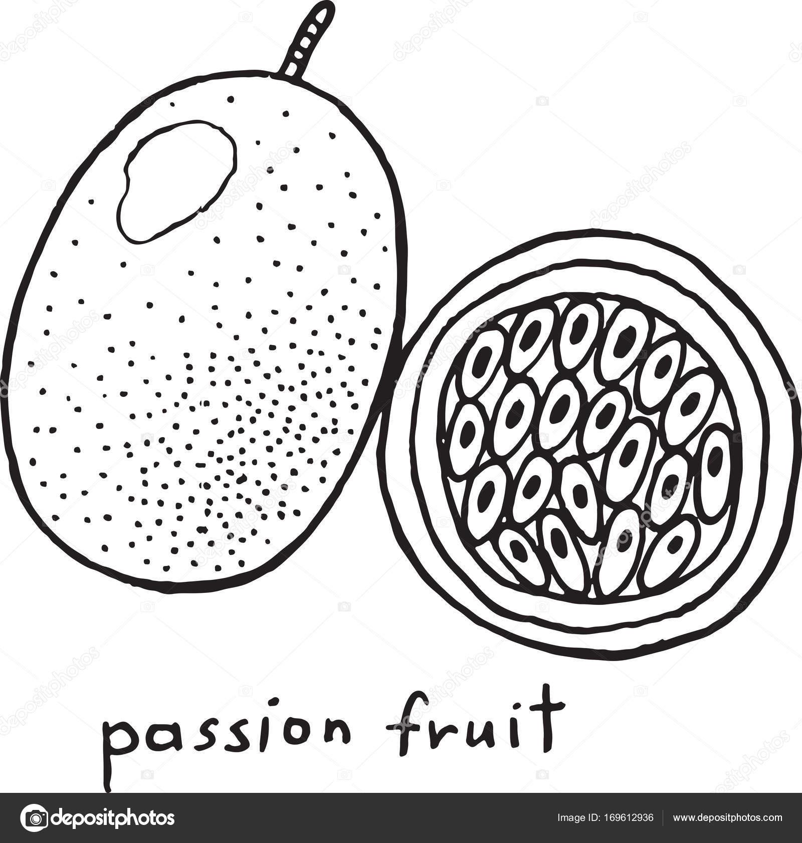 Tutku Meyve Boyama Sayfası Grafik Vektör Siyah Beyaz Sanat Stok