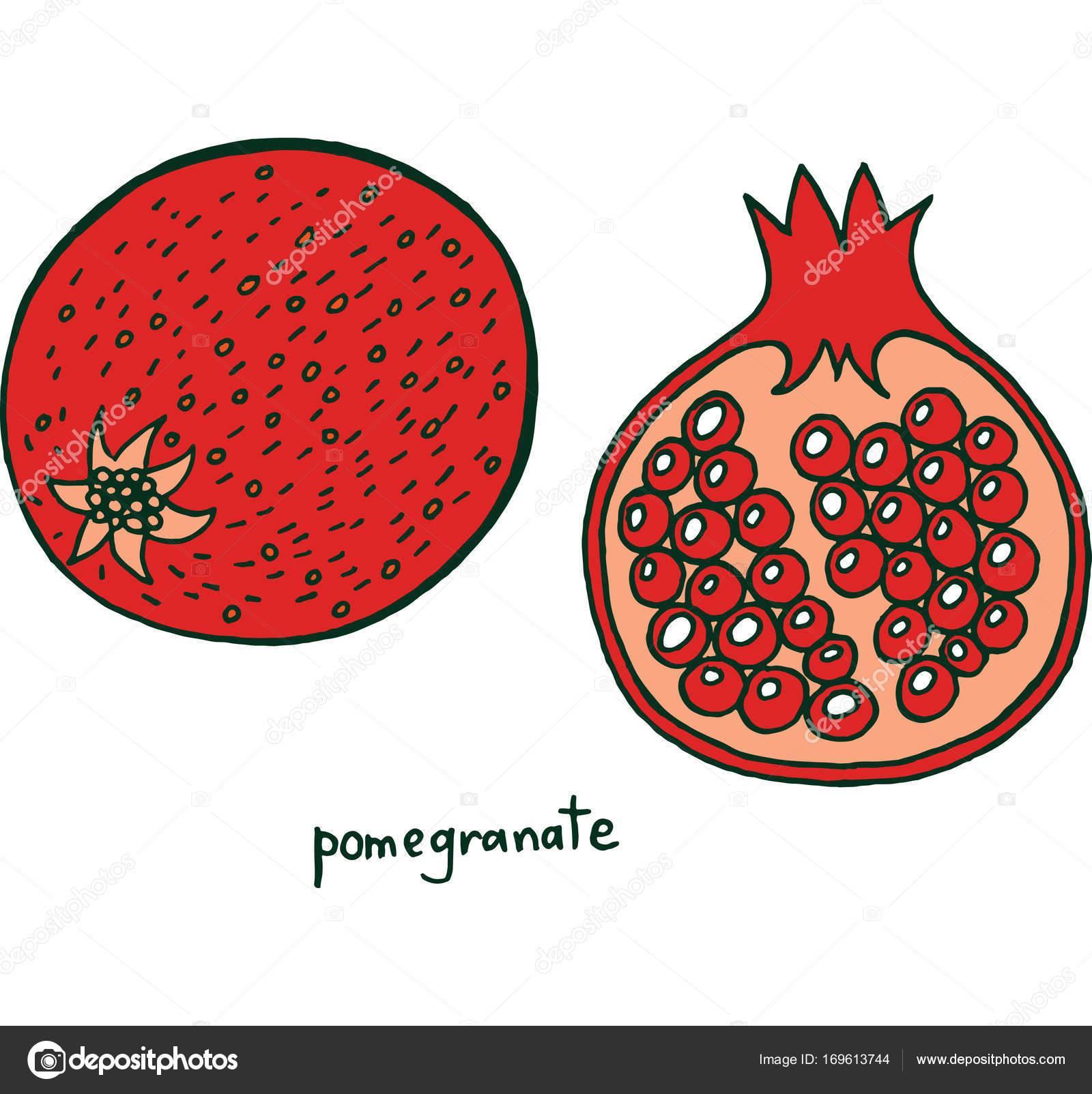 Nar Meyve Boyama Sayfası Grafik Vektör Renkli Doodle Stok Vektör