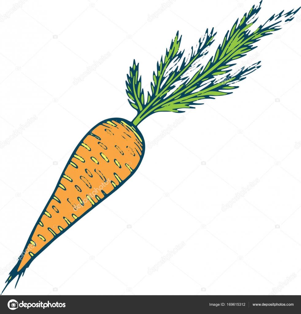 cenoura para colorir ilustração de mão desenhada página para adulto