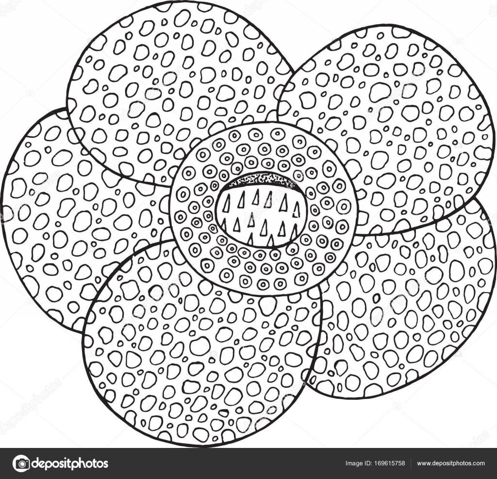 Elemento aislado de Rafflesia flor tropical vector — Vector de stock ...