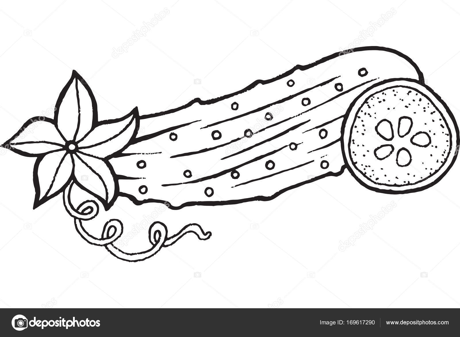 Cucumber coloring page hand drawn illustration — Stock Vector ...