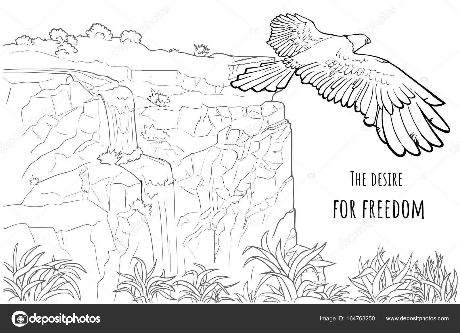 Imágenes La Libertad Para Colorear águila De La Tarjeta