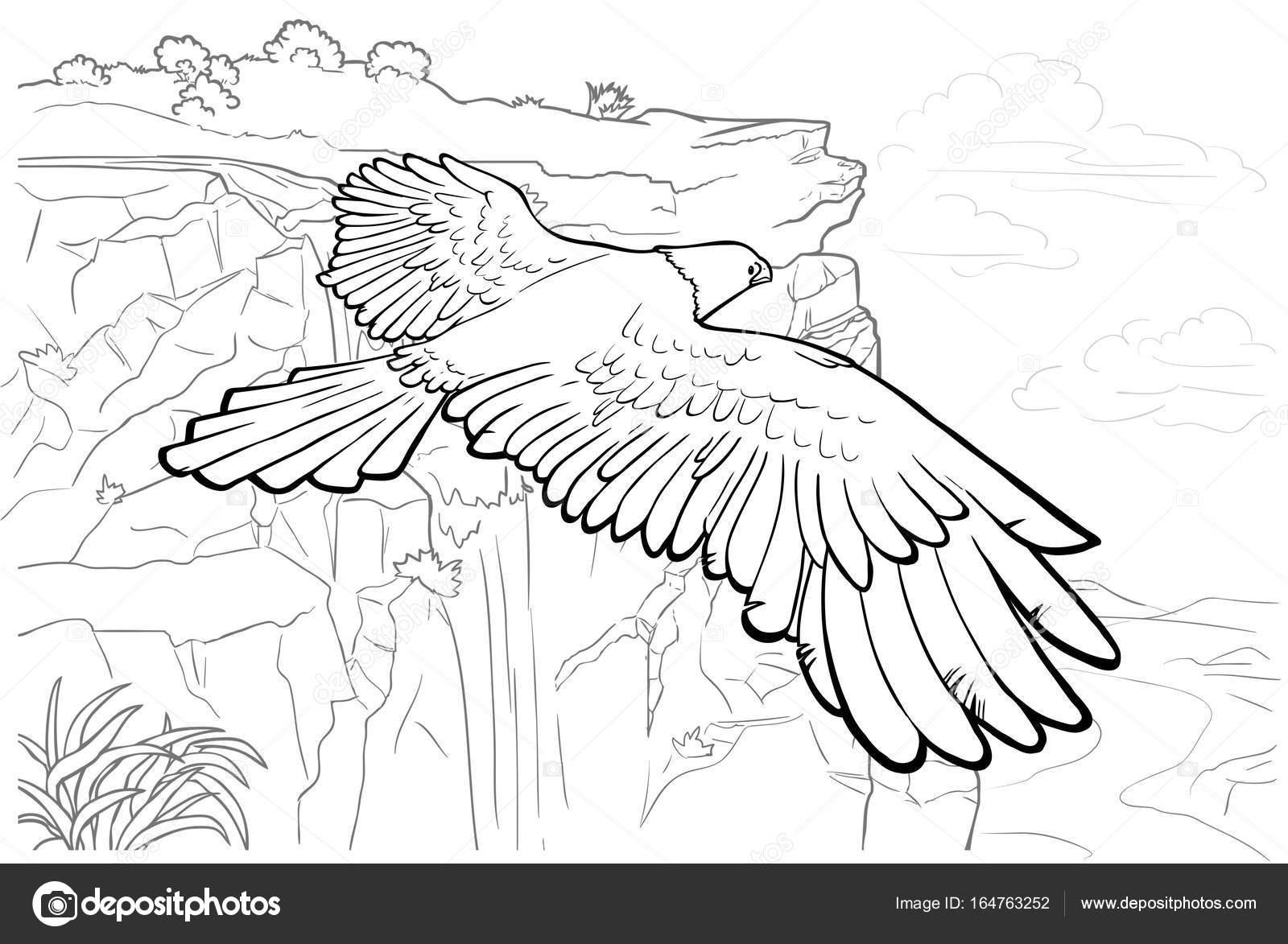 Página para colorear de vuelo del águila — Fotos de Stock ...