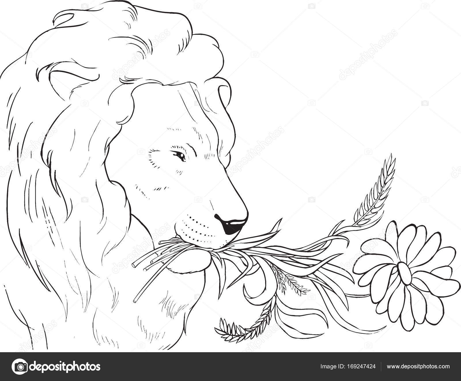 Malvorlagen. Löwe wird Stroh Essen. — Stockfoto © SunFunJen #169247424