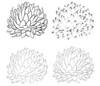 Set of line echeveria icons