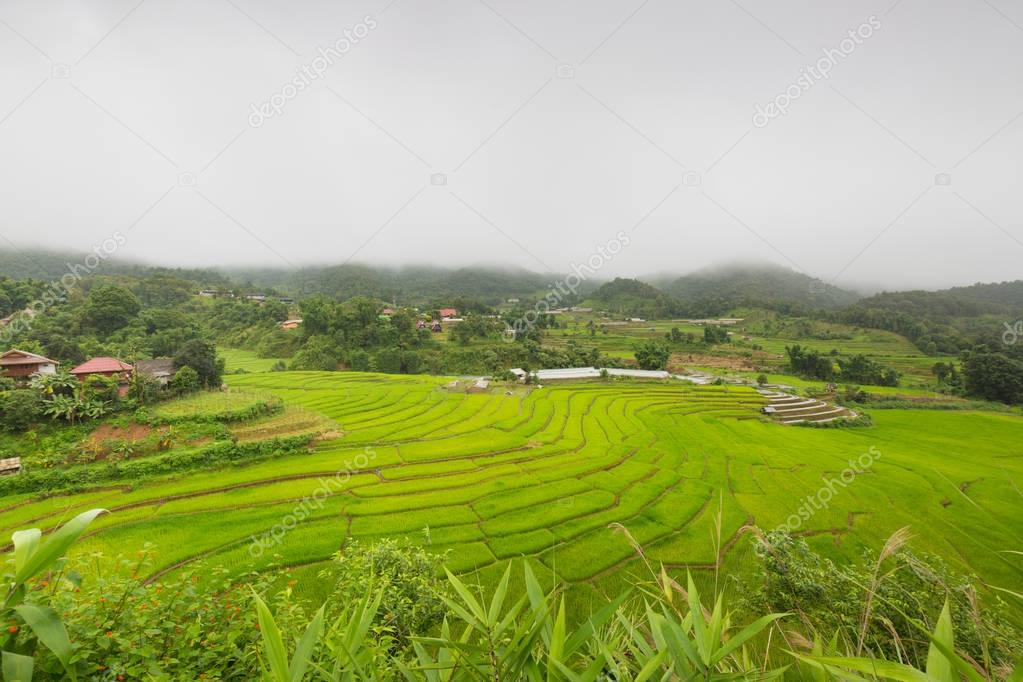 Terraced rice fields in rainy season, northern Thailand