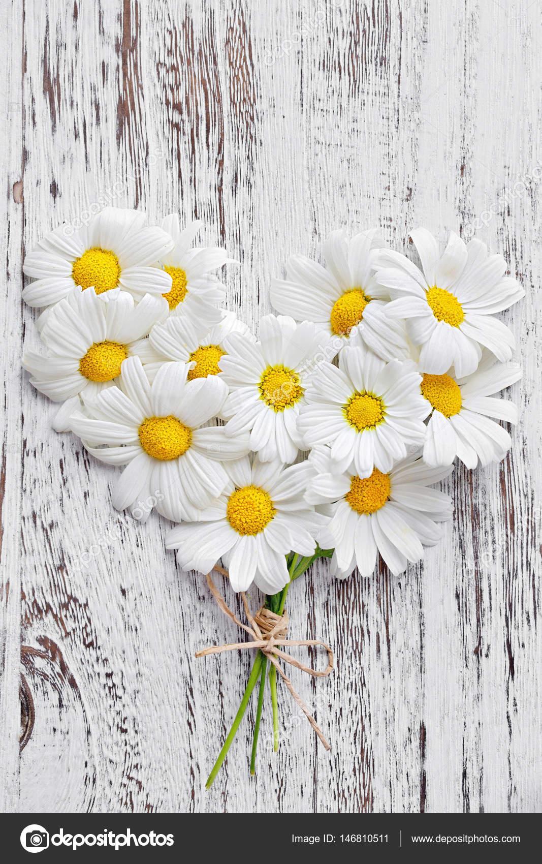 Delicate Daisy Flowers Stock Photo Ulchik74 146810511
