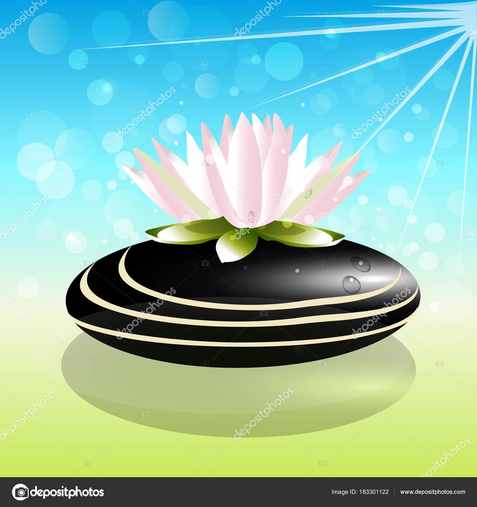 Beautiful Lotus Flower On Zen Stone Background Vector By Glopphy