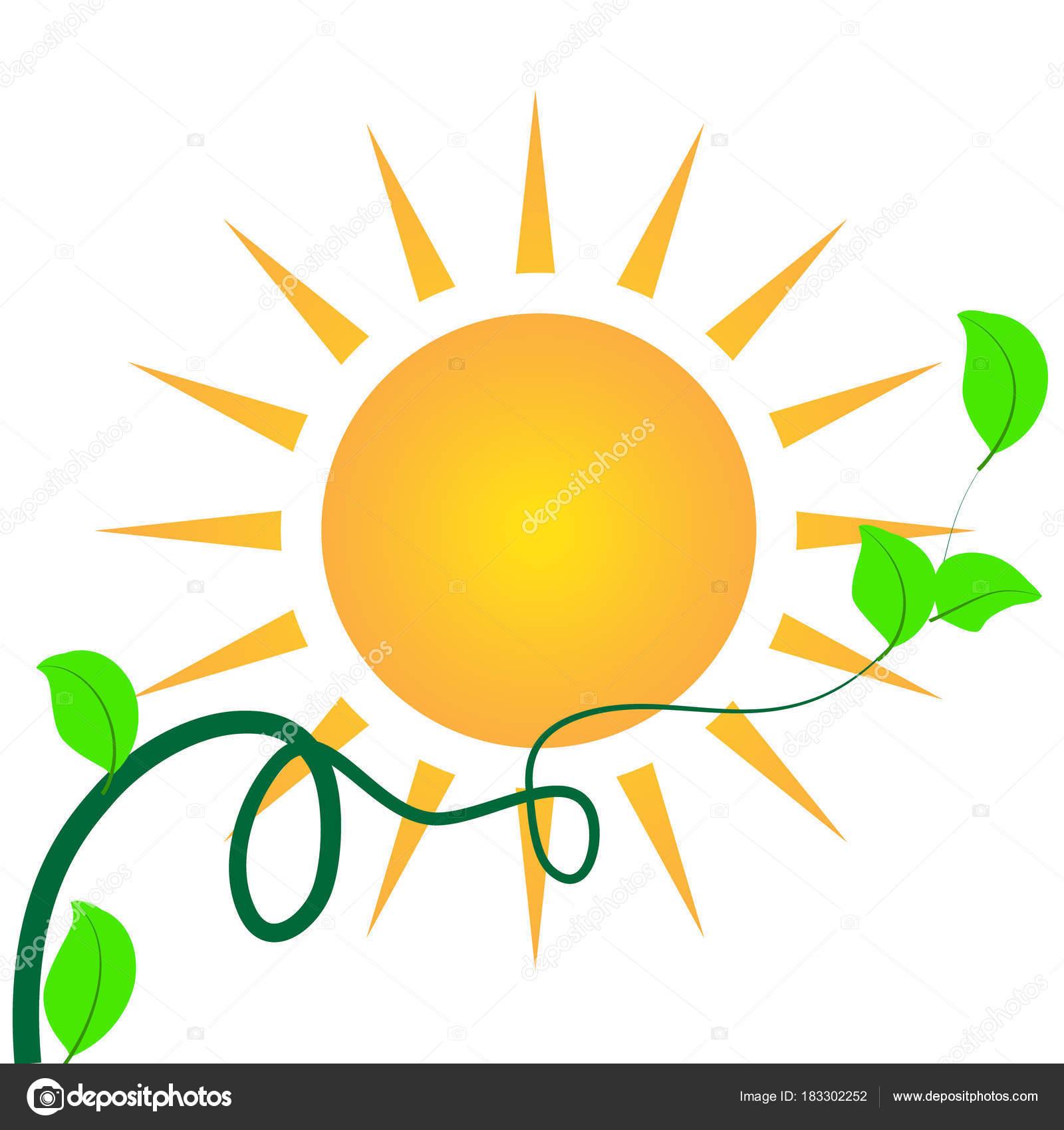 Sol Plantilla Tarjeta Identidad Logotipo Hojas Verdes — Archivo ...