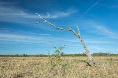 "Картина, постер, плакат, фотообои ""мертвое единственное сухое дерево на диком лугу "", артикул 325387002"