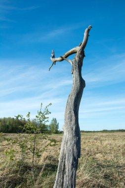"""Картина, постер, плакат, фотообои """"мертвое одинокое сухое дерево на дикой лужайке и голубом небе """", артикул 325387424"""