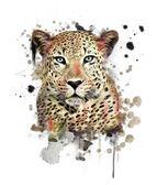 Vad leopard poszter