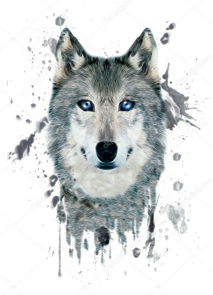 Grafica di lupo su sfondo bianco u2014 foto stock © studiolondon #163467104