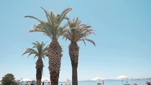 Palmami na pobřeží v přístavu Split, Krásný slunečný den. Split
