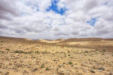 "Картина, постер, плакат, фотообои ""негев пустыня на юге израиля пейзаж ретро"", артикул 146358261"