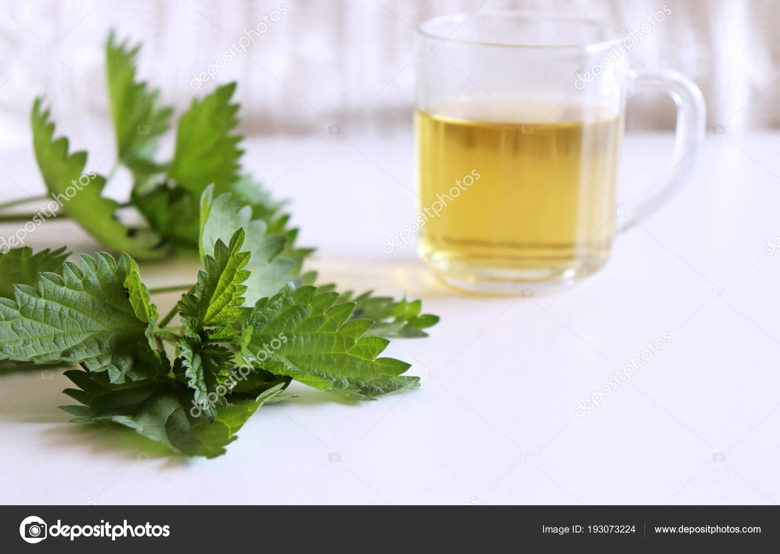Leaves of fresh green nettle and a