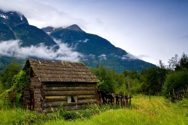 Old, abandoned cabin in an overgrown meadow