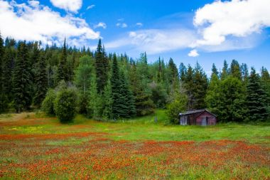 An old wooden cabin at the edge of a flower filled meadow stock vector
