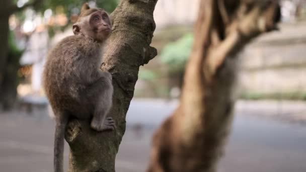Little cute monkey kid sitting on tree in tropical city park