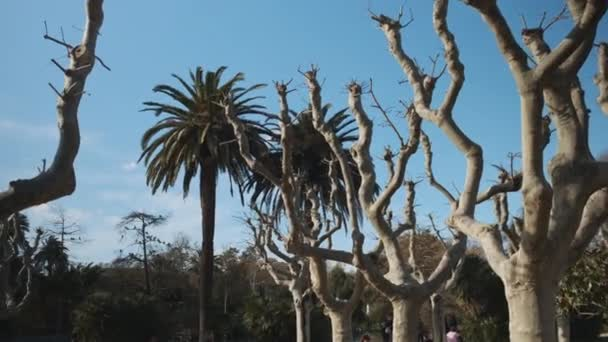 Tracking shot of exotic trees and palms in park over bright blue sky