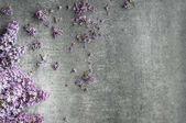 halom lila szirmok