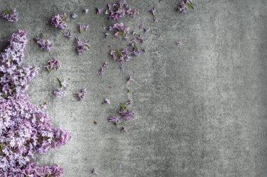 pile of lilac petals