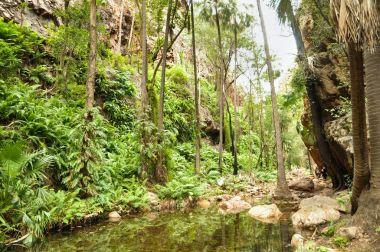 """Картина, постер, плакат, фотообои """"тропические леса с чистым озером """", артикул 161406210"""