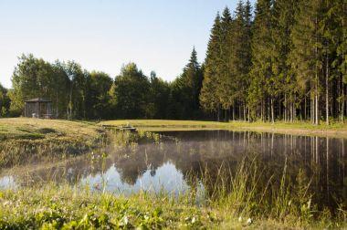 Calm lake near pine forest