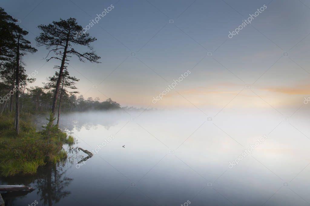 foggy lake near pine forest