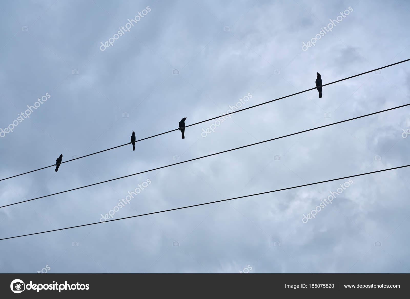 Black birds sitting on electric cable — Stock Photo © bezikus #185075820