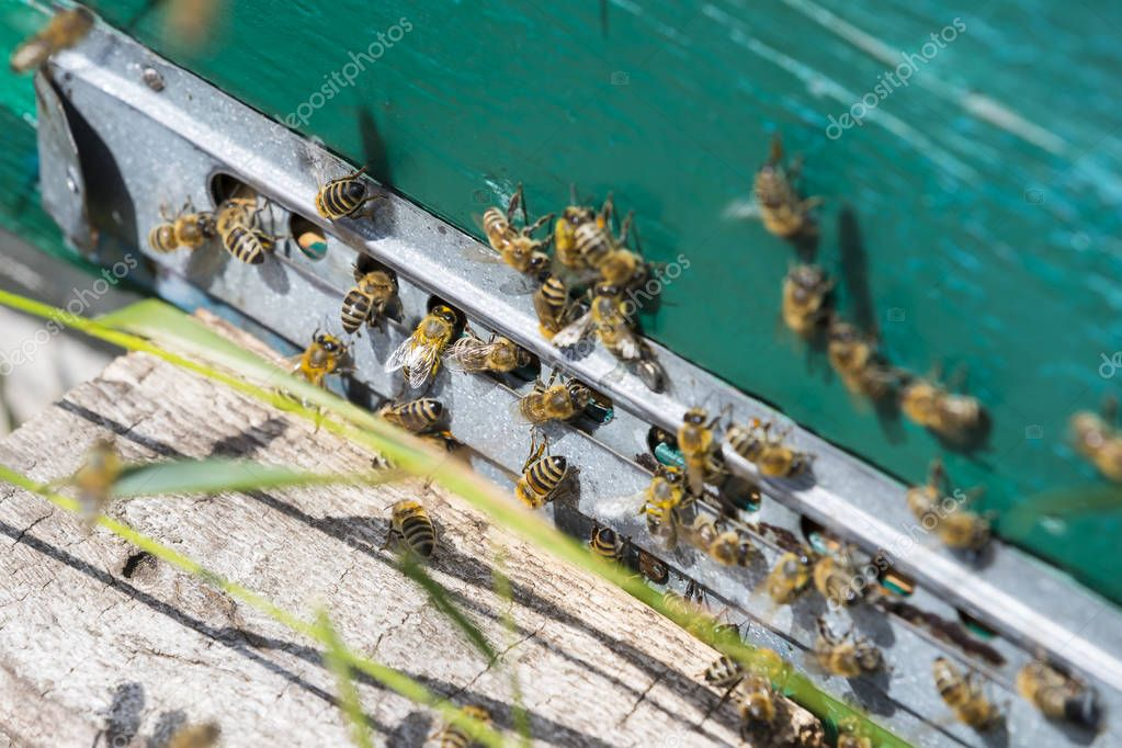 The bee hive is shot close-up