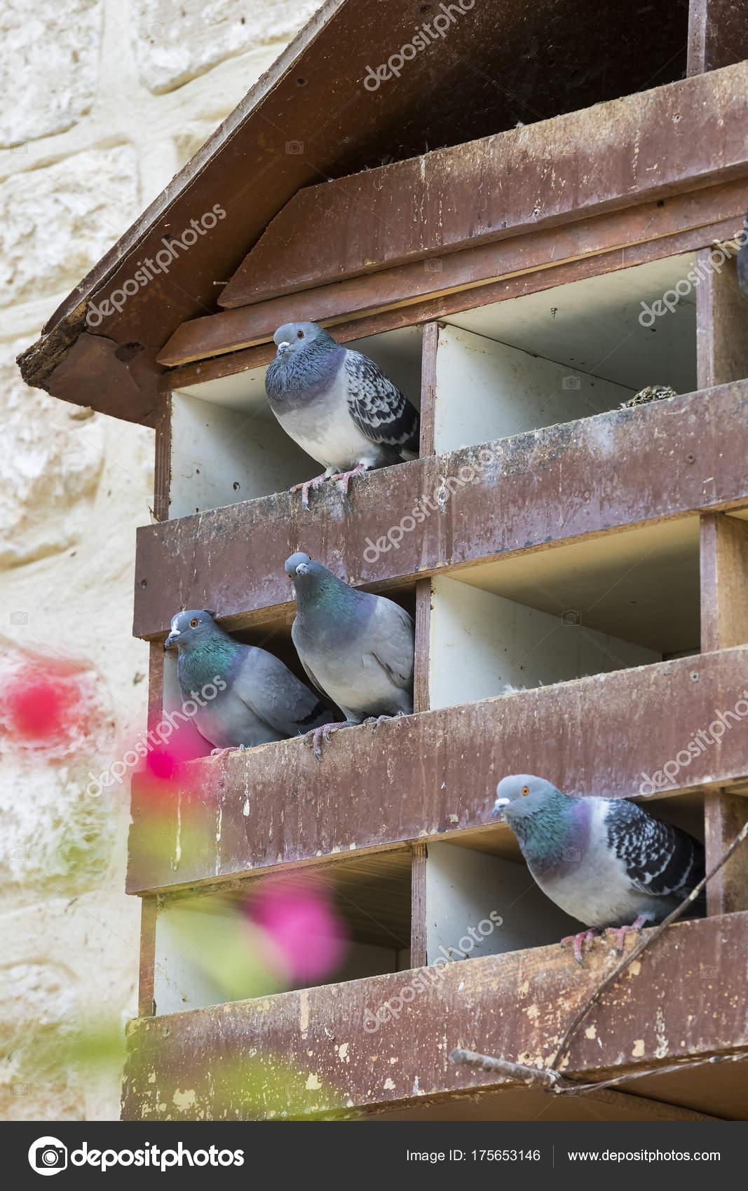 σπίτι μεγάλο πουλί