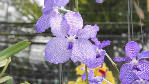 orchids. flower, plant, orchid