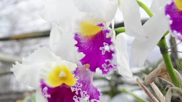 orchideje. květin, rostlin, orchidej