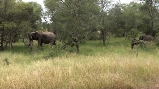 elefántok, Dél-afrikai Köztársaság