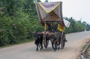 Yoke of oxen, Melaka