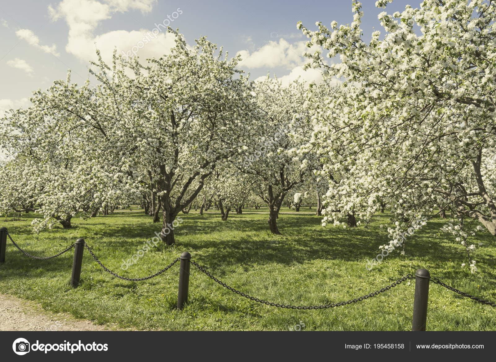 Apple Orchard Spring ⬇ Stock Photo, Image by © iskander1 #195458158