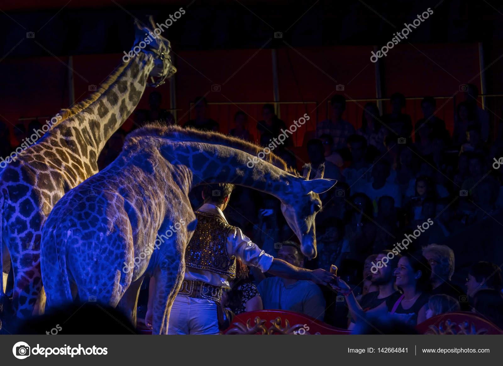 Circus Voyage Preise