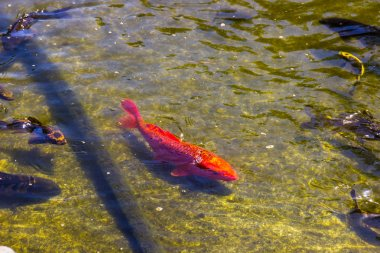 Variety Of Fish In Shallow Pond