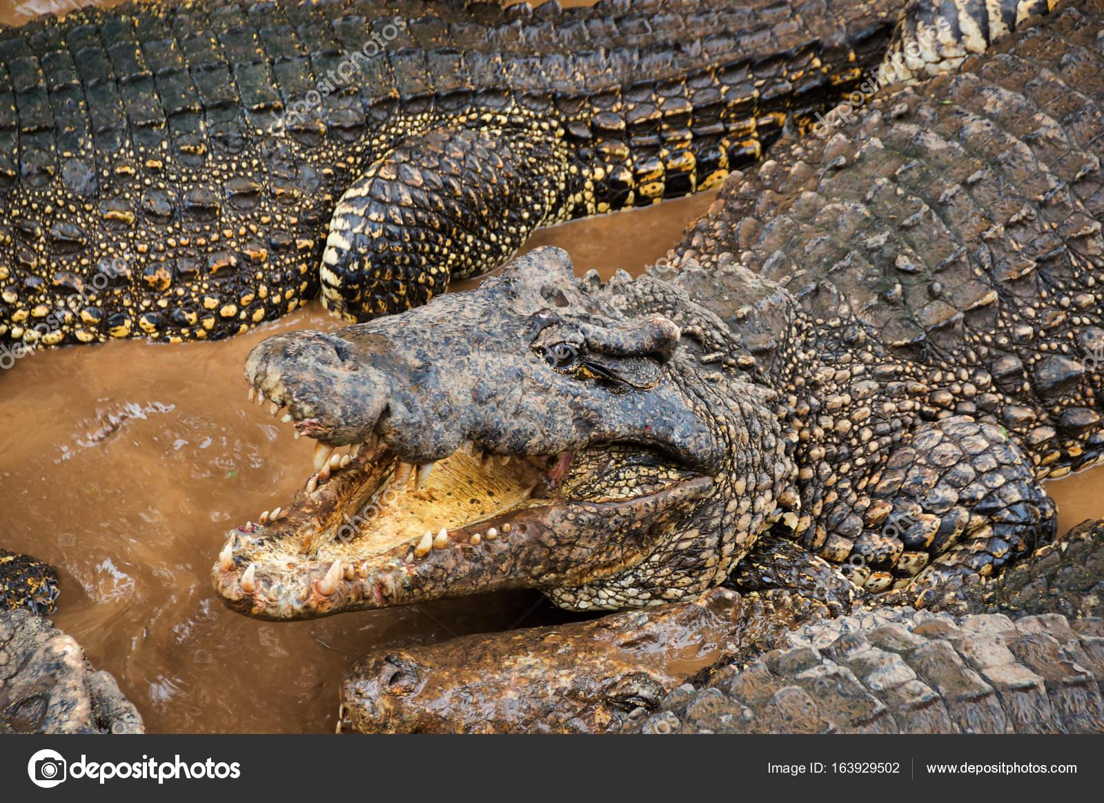 Alligator.ru форекс советник wsfr
