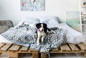 malé štěně s růžové kostěný náhrdelník ležící na posteli