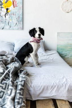 side view of cute puppy with pink neckpiece sitting on bed