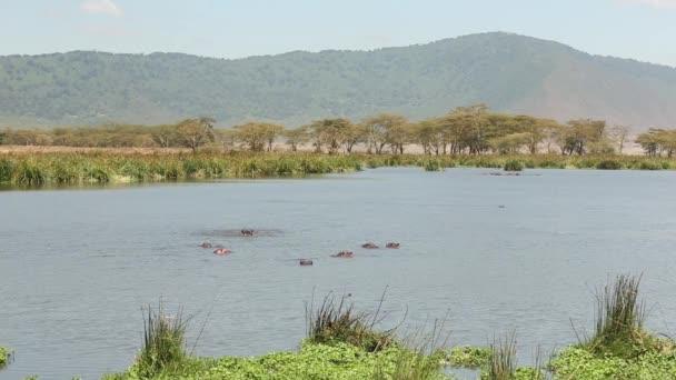 Große Herde afrikanischer Elefanten hinter einem Wasserloch. Flusspferde ruhen sich im Wasser aus. Serengeti, Tansania.