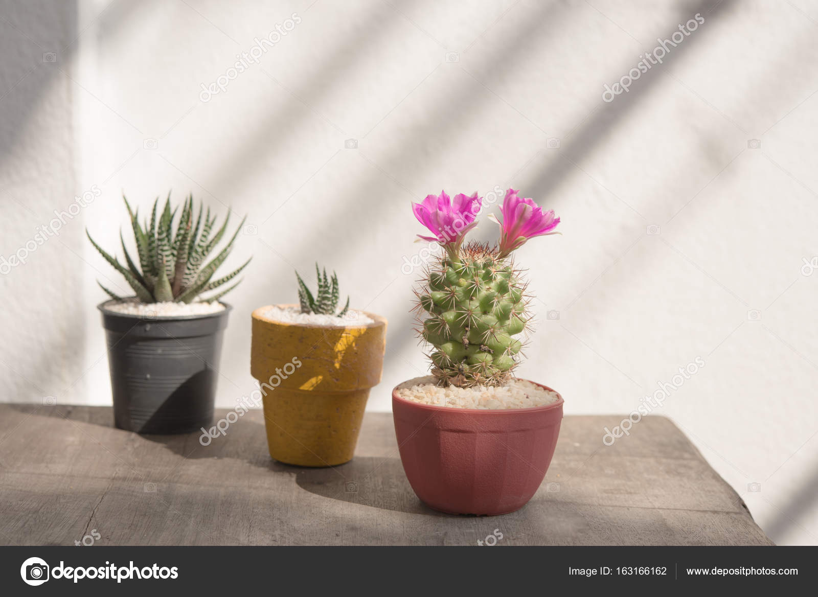 Closeup Pink Cactus Flower On Wooden Background Stock Photo