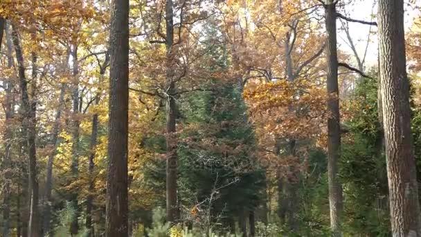 podzim v parku.