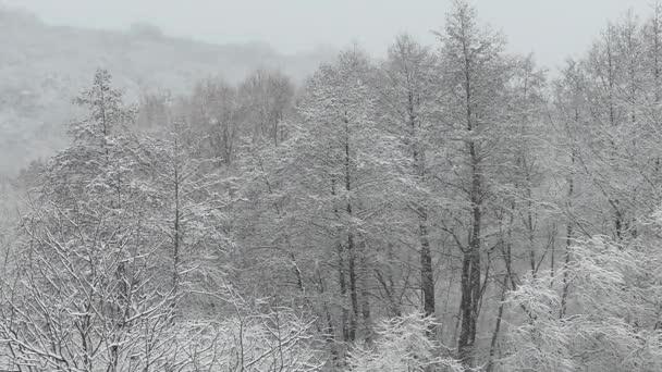 Husté sněžení. Zasněžený les v zimě. Létající sněhové vločky